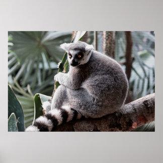 Ring Tail Lemur Wildlife Animal Photo Print
