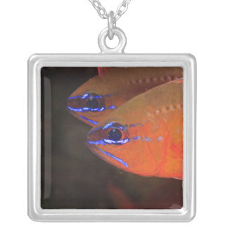 Ring-tailed Cardinalfish Apogon aureus) Milne Silver Plated Necklace