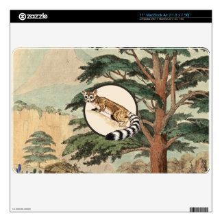 "Ring-Tailed Cat In Natural Habitat Illustration Skins For 11"" MacBook Air"
