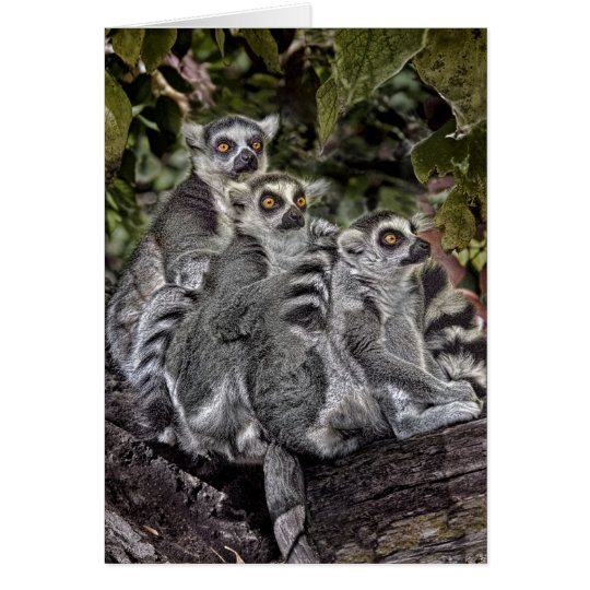 Ring Tailed Leamers in a Row Card
