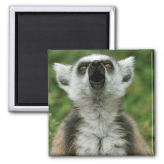 Ring-Tailed Lemur 2 Inch Square Magnet