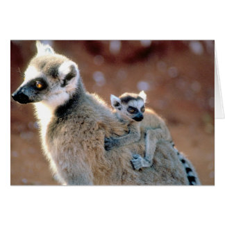 Ring Tailed Lemur And Baby Card