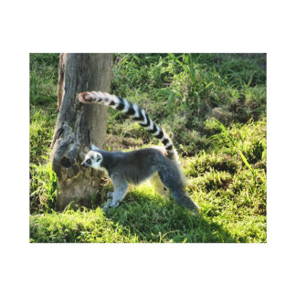 Ring Tailed Lemur Gallery Wrapped Canvas