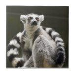 Ring-tailed Lemur Ceramic Tile
