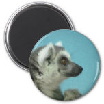Ring-tailed Lemur Classic Magnet