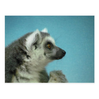 Ring-tailed Lemur Classic Postcard