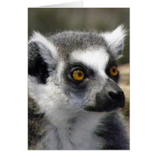 Ring-Tailed Lemur Close Up Portrait Greeting Cards
