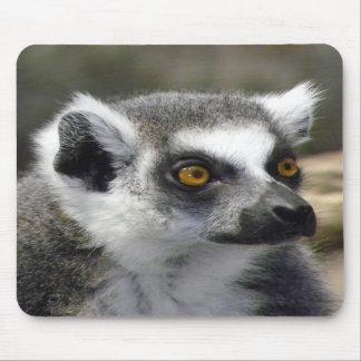 Ring-Tailed Lemur Close Up Portrait Mousepads