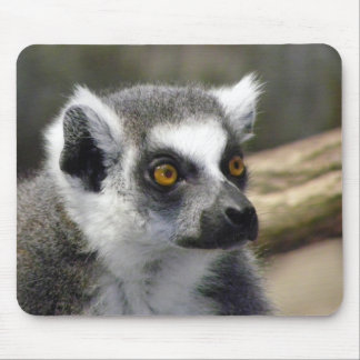 Ring-Tailed Lemur Close Up Portrait Mousepad