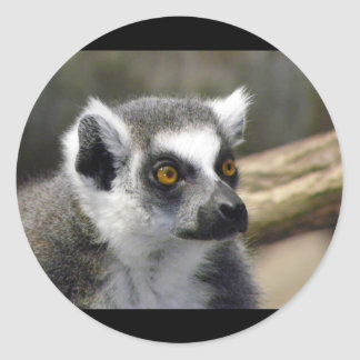 Ring-Tailed Lemur Close Up Portrait Stickers