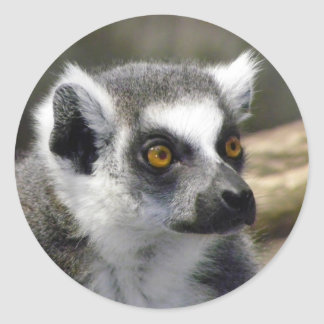 Ring-Tailed Lemur Close Up Portrait Sticker