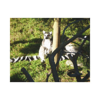 Ring Tailed Lemur Closeup Canvas Print