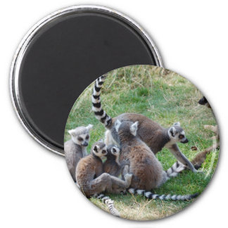 Ring tailed lemur family 2 inch round magnet