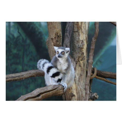 Ring-tailed lemur greeting card