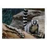 RIng Tailed Lemur Greeting Cards