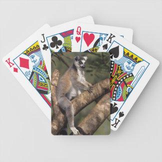 Ring-Tailed Lemur (Lemur Catta), Berenty Bicycle Playing Cards