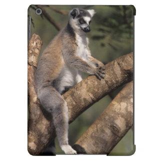 Ring-Tailed Lemur (Lemur Catta), Berenty Cover For iPad Air