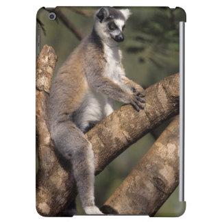 Ring-Tailed Lemur (Lemur Catta), Berenty iPad Air Cases