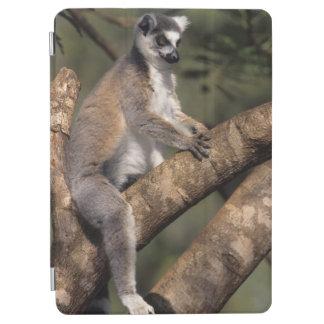 Ring-Tailed Lemur (Lemur Catta), Berenty iPad Air Cover