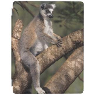 Ring-Tailed Lemur (Lemur Catta), Berenty iPad Cover