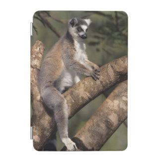 Ring-Tailed Lemur (Lemur Catta), Berenty iPad Mini Cover