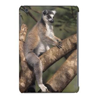 Ring-Tailed Lemur (Lemur Catta), Berenty iPad Mini Retina Cover