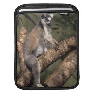Ring-Tailed Lemur (Lemur Catta), Berenty Sleeves For iPads
