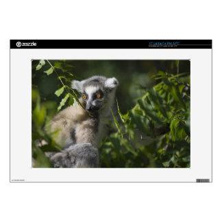 Ring tailed lemur (Lemur catta), Madagascar Skin For Laptop