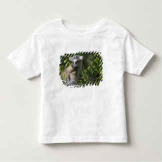Ring tailed lemur (Lemur catta), Madagascar Toddler T-shirt