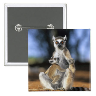 Ring-tailed Lemur, (Lemur catta), Mother and Button