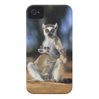 Ring-tailed Lemur, (Lemur catta), Mother and iPhone 4 Cover