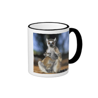 Ring-tailed Lemur, (Lemur catta), Mother and Mugs