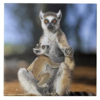 Ring-tailed Lemur, (Lemur catta), Mother and Tile