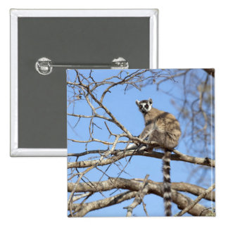 Ring-tailed Lemur (Lemur catta) warming in tree Button