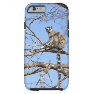 Ring-tailed Lemur (Lemur catta) warming in tree Tough iPhone 6 Case