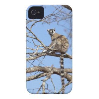 Ring-tailed Lemur Lemur catta warming in tree Case-Mate Blackberry Case