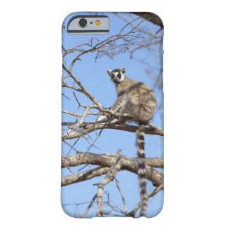 Ring-tailed Lemur Lemur catta warming in tree iPhone 6 Case