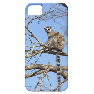 Ring-tailed Lemur (Lemur catta) warming in tree iPhone 5 Cases