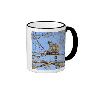 Ring-tailed Lemur (Lemur catta) warming in tree Coffee Mugs