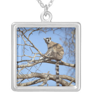 Ring-tailed Lemur (Lemur catta) warming in tree Square Pendant Necklace