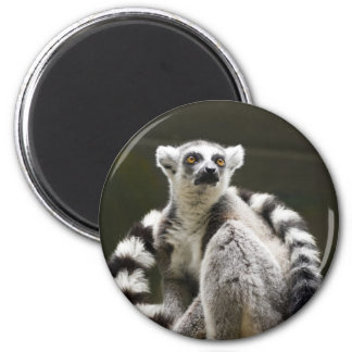 Ring-tailed Lemur 2 Inch Round Magnet