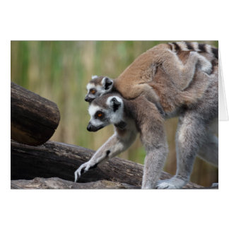 Ring-Tailed Lemur Mother And Baby Card