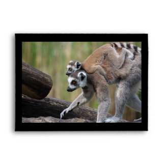 Ring-Tailed Lemur Mother And Baby Envelope