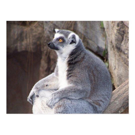 Ring-Tailed Lemur Portrait Postcard