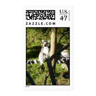 Ring Tailed Lemur Postage