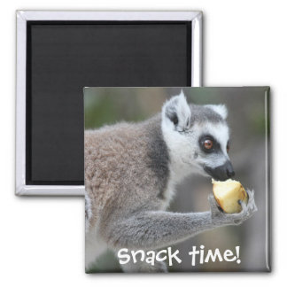 Ring-Tailed Lemur -- Snack Time! Magnet