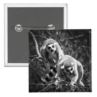 Ring Tailed Lemur Square Button Badge