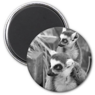 Ring-tailed lemur with baby black and white magnet