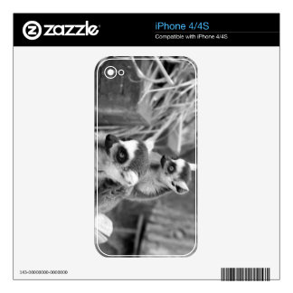 Ring-tailed lemur with baby black and white skins for iPhone 4S