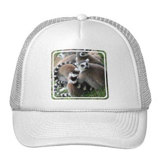 Ring Tailed Lemurs Baseball Hat